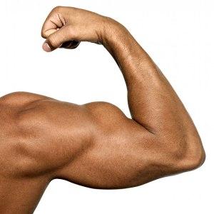 biceps655
